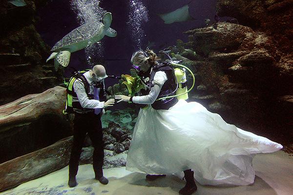 le mariage en aquarium